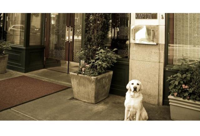 traxfm style pet hotel