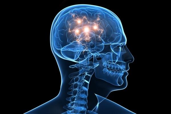 otak buatan seukuran kacang dan sebanding janin usia lima minggu