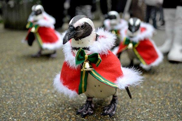 Radio Anak Muda_penguin