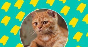 Radio Anak Muda_Kucing